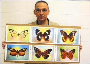 Antonio Guerrero muestra seis de las pinturas de su obra Mariposas Endémicas de Cuba